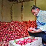 صادر کننده انار ارزان