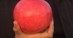 قیمت عمده فروشی انار